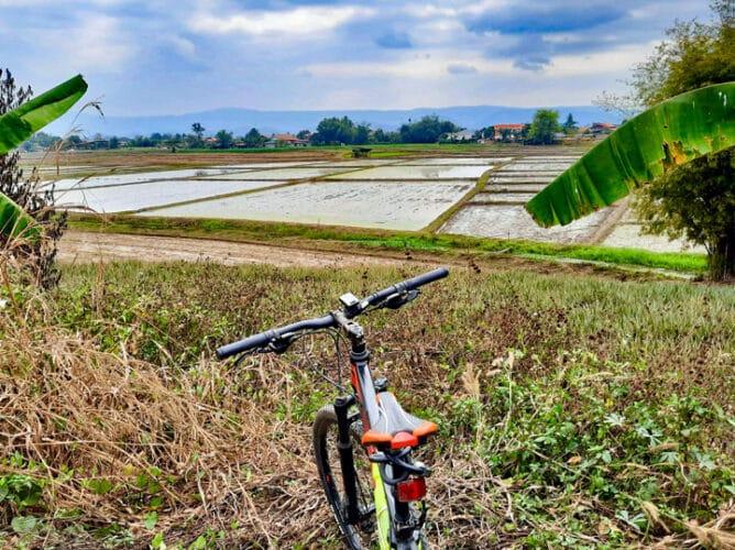 De rijst voor de eerste oogst van dit jaar is al weer aangeplant