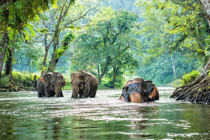 https://www.thailandblog.nl/wp-content/uploads/olifanten-water-720x480.jpg