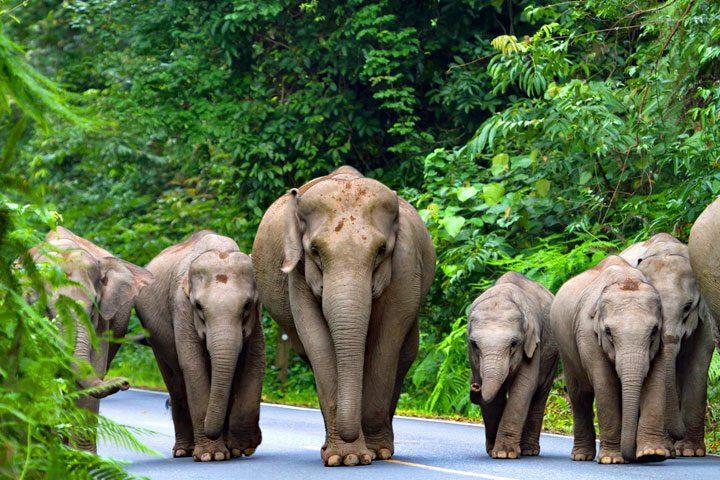 olifant dating site eksisozluk online dating